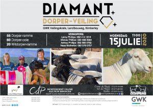 Diamant Dorper Veiling @ Kimberley